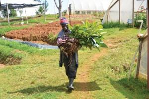 LA WYNNE FARM est en activité depuis 1956 par : PHILIPPE ELIE