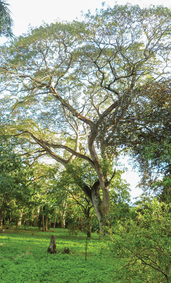 l'habitation Desglaireaux est située au sein d'un espace naturel totalement boisé d'une quarantaine d'hectares. Photographies par Ralph Thomassaint Joseph / Challenges
