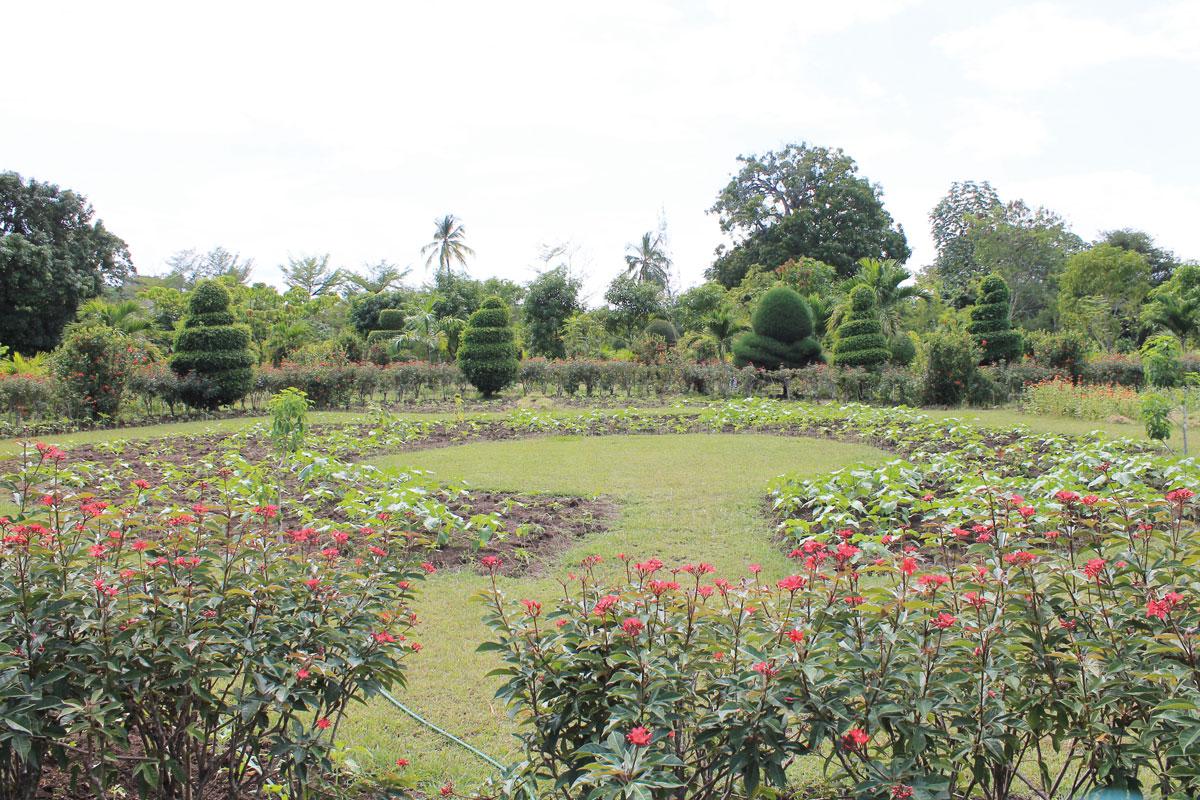 SUR 8HA, le jardin préserve plus de 500 espèces de plantes dont 25 endémiques.