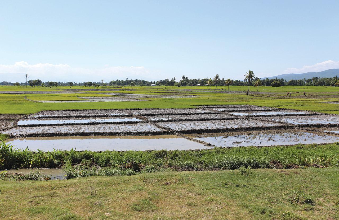 REMISE EN valeur de plusieurs hectares de terres de la plaine rizicole de l'Artibonite